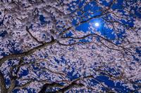佐賀県 宝珠寺のヒメシダレザクラのライトアップと月