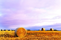 北海道 夕日に染まる丘の小麦のロール