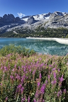 イタリア ボルツァーノ地区 野花が咲くフェダイア湖とマルモラ...