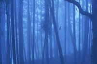 フクロウと森林
