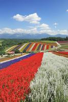 北海道 四季彩の丘の花と十勝岳連峰