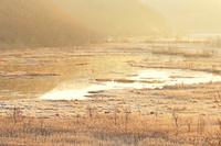 北海道 霧氷のサルルン沼とエゾシカ