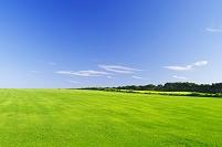 北海道 緑の草原の丘