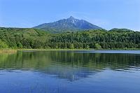 北海道 オタトマリ沼と利尻富士