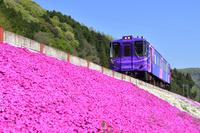 兵庫県 智頭急行 HOT3500形あまつぼしと満開の芝桜