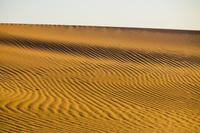 モロッコ サハラ砂漠の風紋
