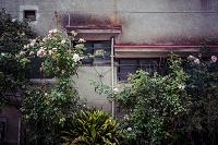 庭木に覆われる老朽家屋