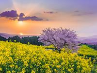 長崎県 白木峰高原