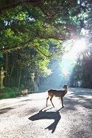 奈良 春日大社 鹿