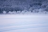 山梨県 霧氷の林朝景