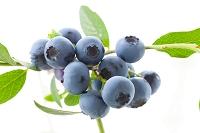 ブルーベリーの実と葉