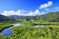 鹿児島県 マングローブ原生林 奄美大島