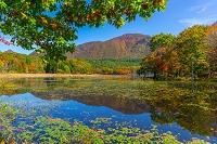 福島県 観音沼森林公園