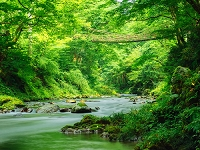 福井県 池田のかずら橋