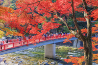 愛知県 紅葉の香嵐渓 待月橋