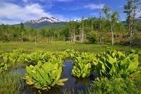 長野県 乗鞍高原・どじょう池と乗鞍岳
