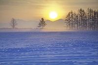 北海道 美瑛町 朝霧の日の出