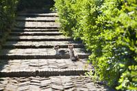 イタリア サン・マルティーノ修道院の子猫