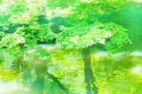 新緑と水面