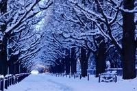 東京都 神宮外苑前銀杏並木