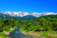 長野県 初夏の大出公園 姫川と北アルプス