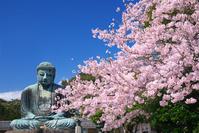 神奈川県 鎌倉大仏