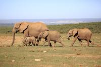 アドゥエレファント国立公園 南アフリカ