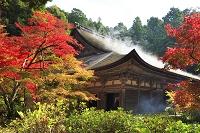 滋賀県 金剛輪寺の紅葉