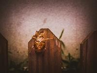 木の柵に残るセミの抜け殻
