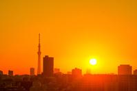 東京 自然 日の出