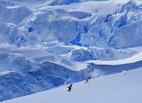南極 ジェンツーペンギンと氷河