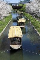 濠川に係留中の十石舟