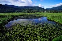 群馬県 片品村 尾瀬ヶ原 池塘と浮島