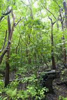 東京都 小笠原母島のジャングルに今も佇む旧日本軍の高角砲