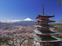 山梨県 桜と富士山と忠霊塔