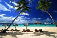 フィリピン ヤシの木と青い海