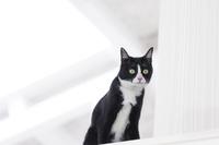 棚の上から見つめる猫