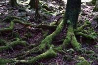 山梨県 樹海の森