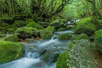 白谷雲水峡の木々と川