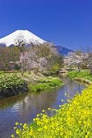 山梨県 富士山と桜