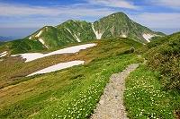 富山県 立山・稜線のお花畑と奥大日岳