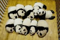 生まれた三か月のパンダ