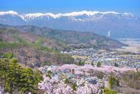 長野県 高遠城趾公園と中央アルプス