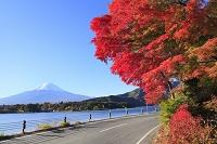山梨県 富士河口湖町 富士山と紅葉と河口湖
