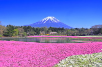 山梨県 富士芝桜まつり