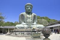神奈川県 鎌倉の大仏