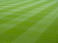 競技場の芝生