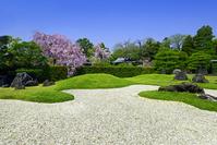 京都府 城南宮 庭園 桜