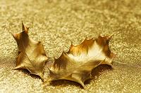 金色のヒイラギの葉