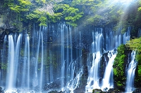 静岡県 新緑の白糸滝